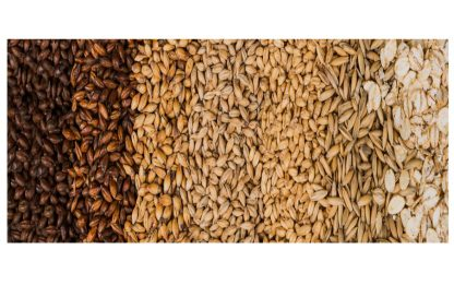 grains malts